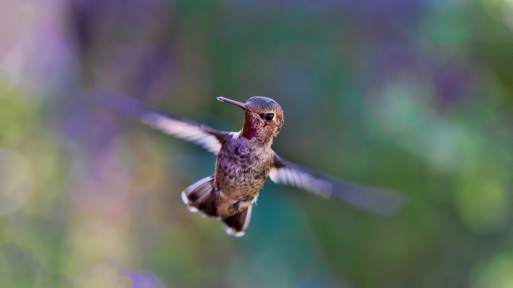 Google's Hummingbird Update, released in 2013, was a huge change from the old algorithm. Google named it Hummingbird because it promised speed and precision, much like it's tiny namesake.